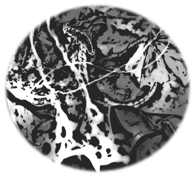 Drachenbrut - Drache - round