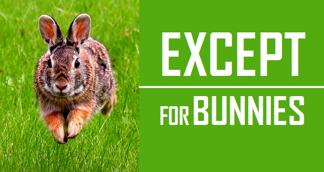Except for Bunnies - Logo